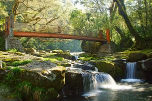 新緑の菊池渓谷の写真素材 [FYI04330912]
