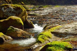 新緑の菊池渓谷の写真素材 [FYI04330942]