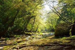 新緑の菊池渓谷の写真素材 [FYI04330944]