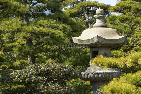 灯篭と日本庭園の写真素材 [FYI04331031]