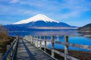 山中湖畔の木道から富士山(逆さ富士)の写真素材 [FYI04331603]