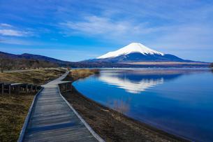山中湖畔の木道から富士山(逆さ富士)の写真素材 [FYI04331776]