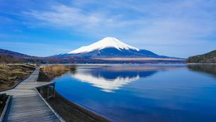 山中湖畔の木道から富士山(逆さ富士)の写真素材 [FYI04331901]