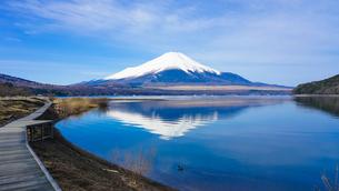 山中湖畔の木道から富士山(逆さ富士)の写真素材 [FYI04332027]