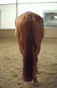 Horse, rear viewの写真素材 [FYI04332708]