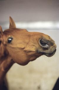 Head of horse, close-upの写真素材 [FYI04332715]