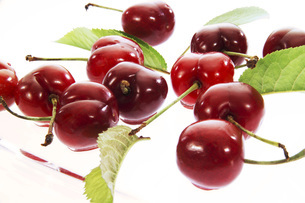 Sour Cherries, close-upの写真素材 [FYI04332832]