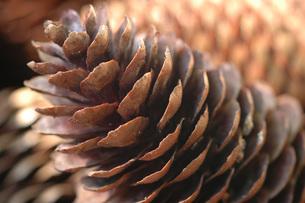 Fir cone, close-upの写真素材 [FYI04332868]
