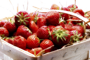 Fresh strawberries in a basketの写真素材 [FYI04332896]