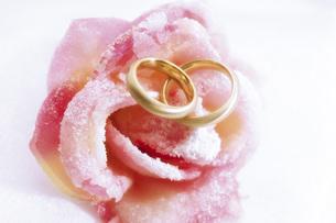 Wedding rings on pink roseの写真素材 [FYI04332918]
