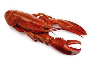 Lobsterの写真素材 [FYI04332930]