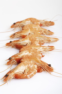 Fresh king prawns in row, close-upの写真素材 [FYI04332933]