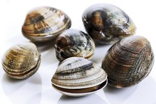 Fresh musselsの写真素材 [FYI04332934]