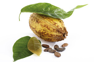 Cacao plant, hull and beansの写真素材 [FYI04332950]