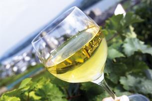 Winetasting, glass of white wineの写真素材 [FYI04332977]