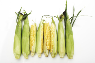 Fresh corncobsの写真素材 [FYI04332983]