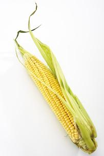 Fresh corncobの写真素材 [FYI04332984]