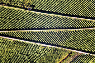 Germany, winegrowing near Mosel riverの写真素材 [FYI04332992]