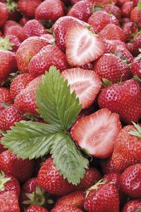 Fresh strawberries, close-upの写真素材 [FYI04333020]