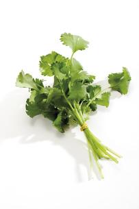 Coriander, cilantro, close-upの写真素材 [FYI04333076]