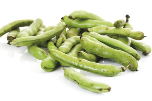 Broad beans, close-upの写真素材 [FYI04333093]