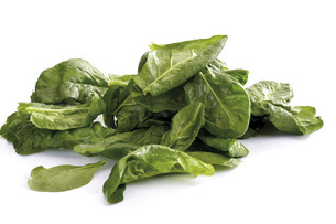 Fresh spinach leavesの写真素材 [FYI04333175]