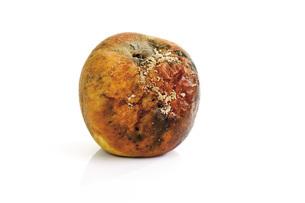 Moldy apple, close-upの写真素材 [FYI04333177]