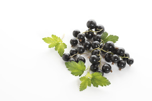 Black Currants with leaves, elevated viewの写真素材 [FYI04333247]