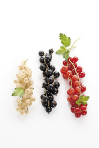 Currants, elevated viewの写真素材 [FYI04333249]