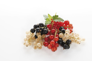 Currants, elevated viewの写真素材 [FYI04333250]