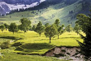 Austria, Tyrol, Landscape with treesの写真素材 [FYI04333270]
