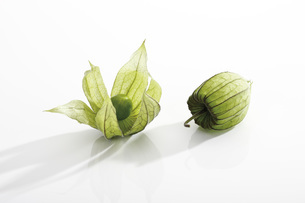 Unripe Physalis fruit (Physalis peruviana), close-upの写真素材 [FYI04333275]