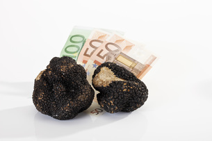 Euro notes and black Truffleの写真素材 [FYI04333298]