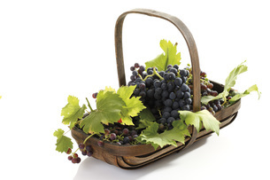 Bunch of grapes in basket, elevated viewの写真素材 [FYI04333377]
