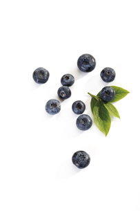 Blueberries, elevated viewの写真素材 [FYI04333385]