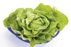 Lettuce (Lactuca sativa var. capitata) in plastic bowl, elevの写真素材 [FYI04333400]
