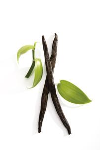 Vanilla beans (Vanilla planifolia)の写真素材 [FYI04333412]