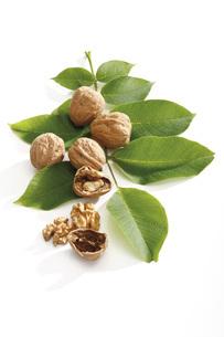 Fresh walnuts and leavesの写真素材 [FYI04333413]