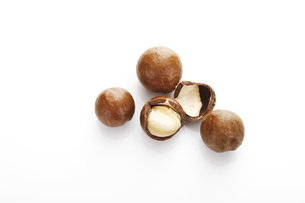 Macadamia nuts,, elevated viewの写真素材 [FYI04333414]