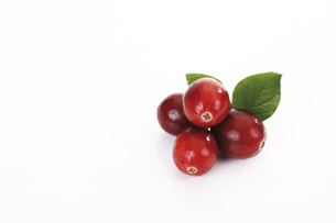 Cranberries (Vaccinium macrocarpon)の写真素材 [FYI04333427]