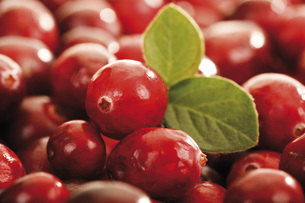 Cranberries (Vaccinium macrocarpon), full frame, close-upの写真素材 [FYI04333429]