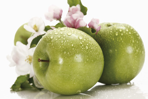 Green apples with water droplets, in background apple blossoの写真素材 [FYI04333450]