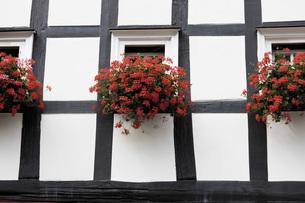 Germany, North Rhine-Westphalia, Freudenberg, Flower boxes oの写真素材 [FYI04333484]