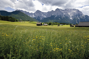 Germany, Bavaria, View of hump-meadow with karwendel mountaiの写真素材 [FYI04333501]