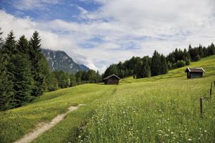 Germany, Bavaria, View of hump-meadow with karwendel mountaiの写真素材 [FYI04333502]