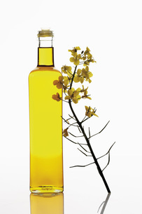 Rapeseed oil in bottle with rape blossom on white backgroundの写真素材 [FYI04333504]