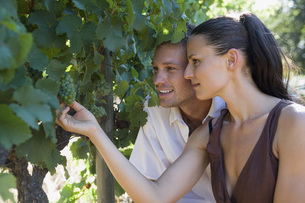 Young couple looking at grape vine, close-upの写真素材 [FYI04333713]