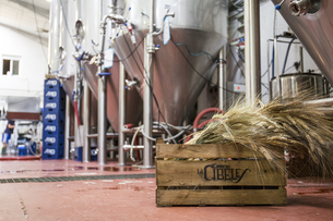 Wooden box with barley in a beer factoryの写真素材 [FYI04333930]