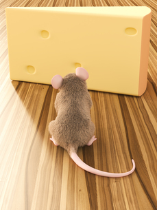 Mouse looking at piece of cheeseの写真素材 [FYI04334114]