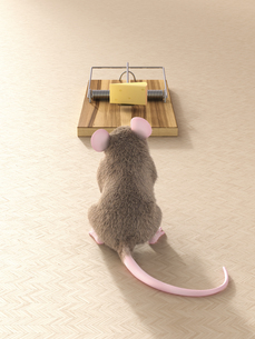 Mouse looking at piece of cheese in mouse trapの写真素材 [FYI04334115]